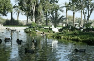 Al Areen Park and Reserve